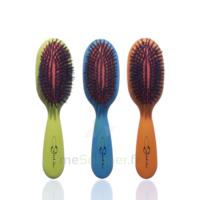 Cartel Brosse Cheveux Pneumatique Sanglier /1 à RUMILLY